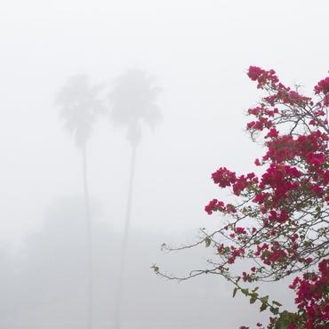 Untitled (Mist)