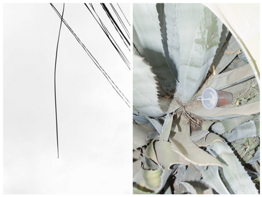 Cables & Cactus Diptych