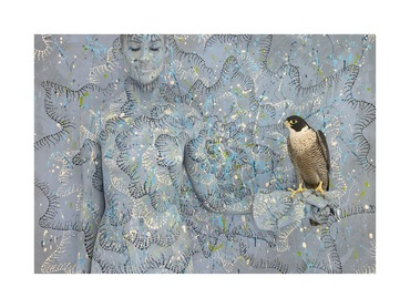 Peregrine Falcon with Spotted Sun