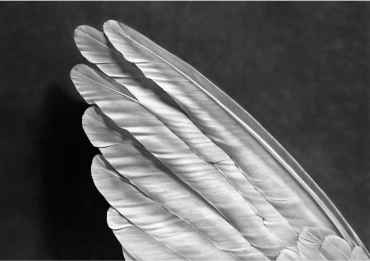 Angel´s Wing (Small Version)
