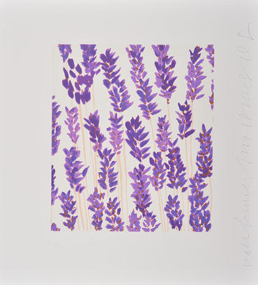 Violet Sage (Wall Flowers)