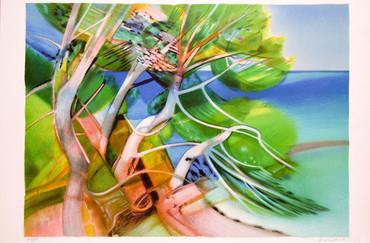 Les pins marins