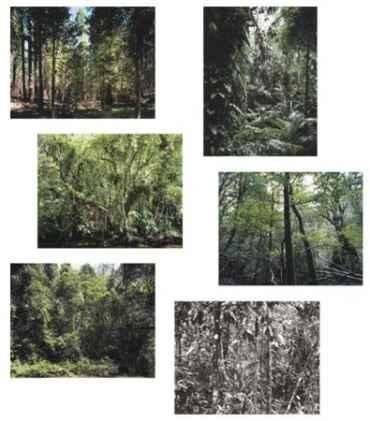 Paradise - portfolio of six works
