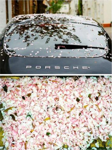 Sakura Rain