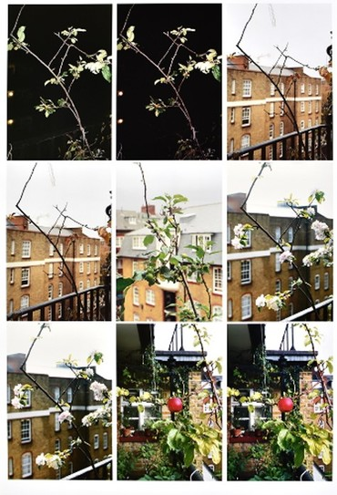 Process (apple tree) (2012)