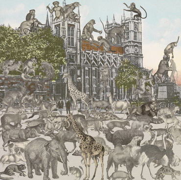 Westminster Abbey - Animalia