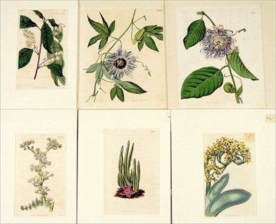 A Collection of Botanical Prints-