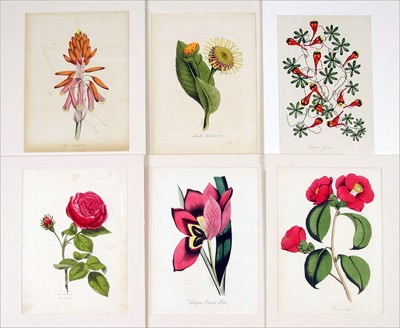 A Collection of 19th Century Floral Botanical Prints-