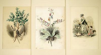 Jean Gerard Grandville-After Jean Gerard Grandville - From Les Fleurs Animees, Part Two-1847