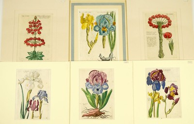A Collection of Early German Botanical Prints-