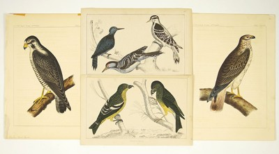 A Collection of Bird Prints-