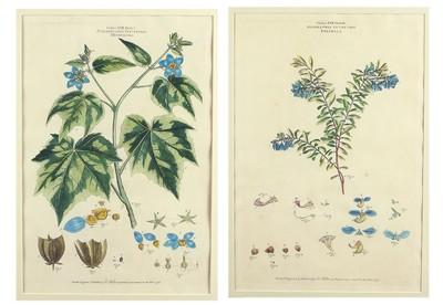 Johann Sebastian Muller-Two Botanicals-1776