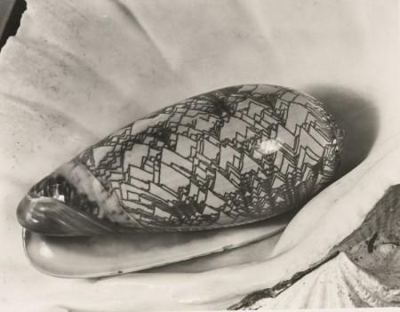 Imogen Cunningham-Shell In Shell-1930