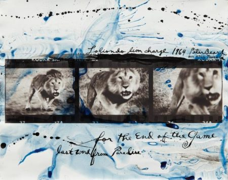 Peter Beard-Lolindo Lion Charge-1964