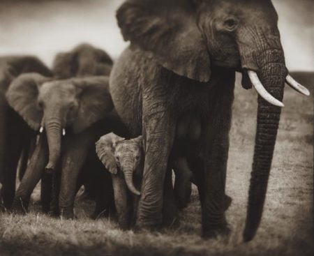 Nick Brandt-Elephant Mother And Two Babies, Serengeti-2002