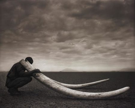Nick Brandt-Ranger With Tusks Of Killed Elephant, Amboseli-2011