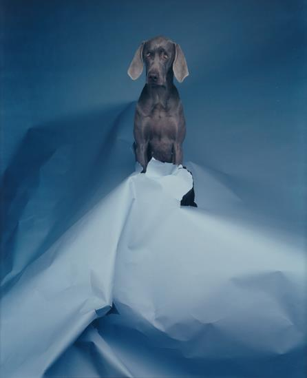 William Wegman-Blue Volcano-1992