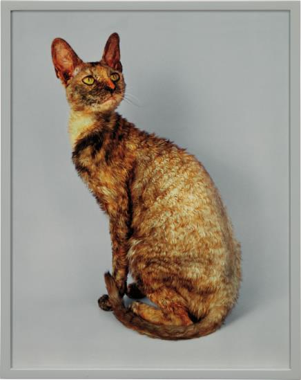 Elad Lassry-Cornish Rex-2007
