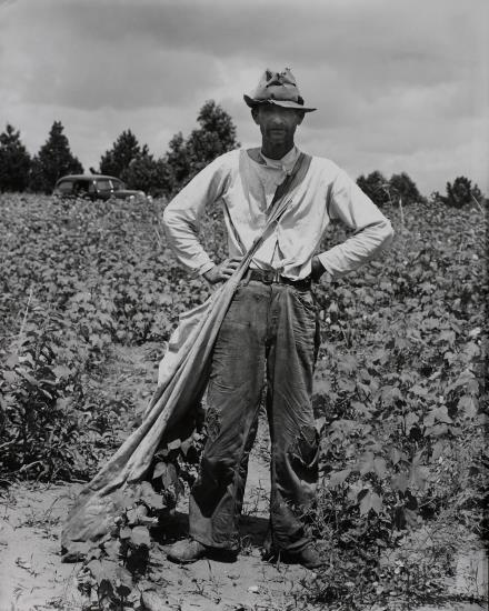 Walker Evans-Bud Fields In His Cotton Field, Hale County, Alabama, Summer-1936