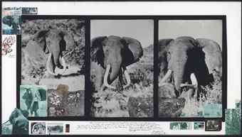 Peter Beard-Ahmed Triptych-1962
