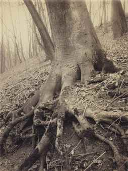 Eugene Atget-Tree Roots, St. Cloud-1906