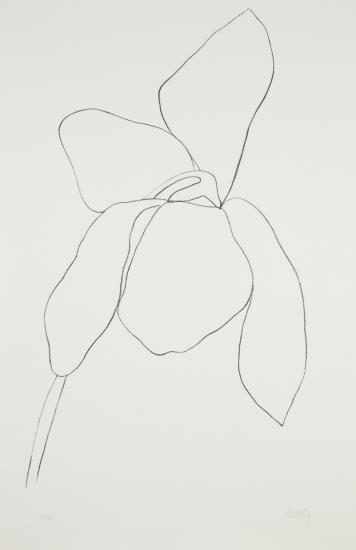 Ellsworth Kelly-Cyclamen Ii, From Suite Of Plant Lithographs-1965