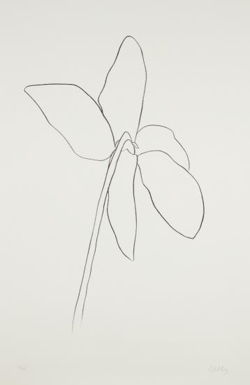 Ellsworth Kelly-Cyclamen Iv, From Suite Of Plant Lithographs-1965