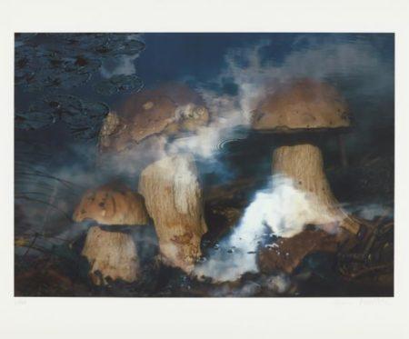 Peter Fischli & David Weiss-Pilze Im Wasser (Mushrooms In Water)-1998