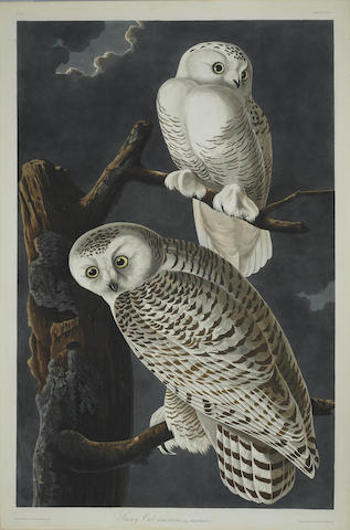 John James Audubon-After John James Audubon - Snowy Owl (Pl. CXXI)-1831