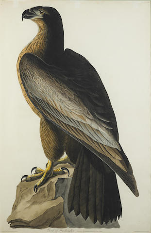 John James Audubon-After John James Audubon - Bird of Washington (Pl. XI)-1830