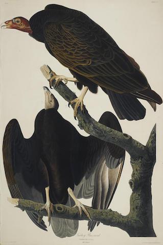 John James Audubon-After John James Audubon - Turkey Buzzard (Pl. CLI)-1832