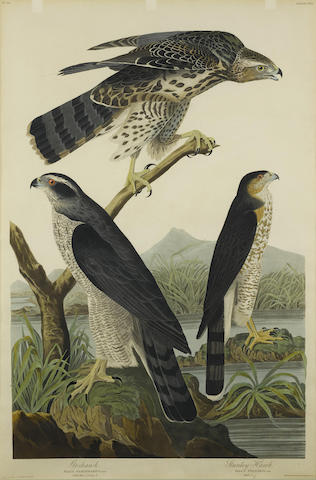 After John James Audubon - Goshawk. Stanley Hawk (Pl. CXLI)-1836