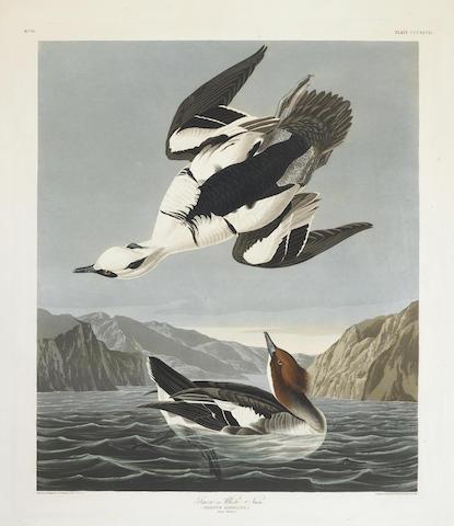 John James Audubon-After John James Audubon - Smew or White Nun (Pl. CCCXLVII)-1836