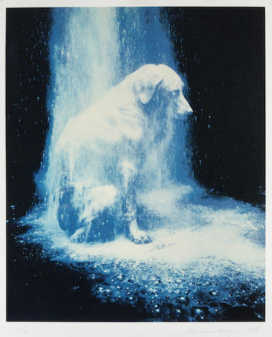 William Wegman-Dusted-1988