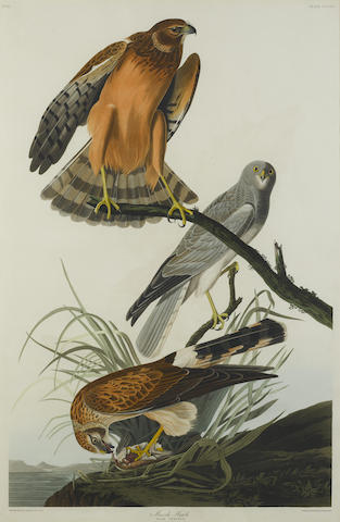 John James Audubon-After John James Audubon - Marsh Hawk (Pl. CCCLVI)-1837