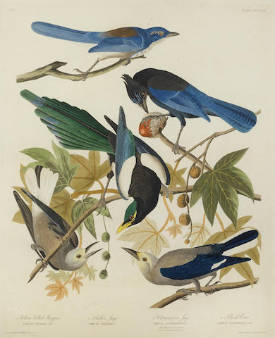 John James Audubon-After John James Audubon - Yellow-Billed Magpie. Stellars Jay. Ultramarine Jay. Clark's Crow, (Pl. CCCLXII)-1837