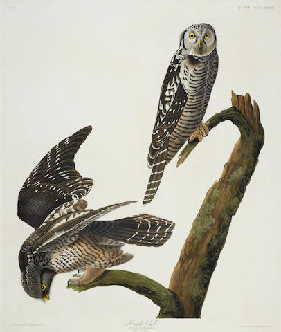 John James Audubon-After John James Audubon - Hawk Owl (Pl. CCCLXXVIII)-1837