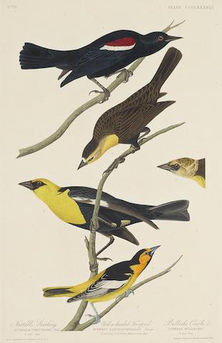 John James Audubon-After John James Audubon - Nuttall's Starling. Yellow-headed Tropical. Bullock's Oriole (Pl. CCCLXXXVIII); MacGillivray's Finch (Pl. CCCLV) 2-1837