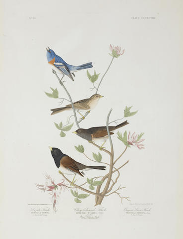 After John James Audubon - Lazuli Finch. Clay-coloured Finch. Oregon Snow Finch (Pl. CCCXCVIII)-1837