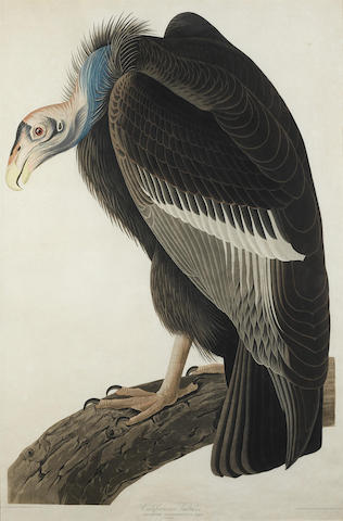 John James Audubon-After John James Audubon - Californian Vulture (Pl. CCCCXXVI)-1838