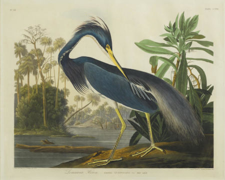 John James Audubon-After John James Audubon - Louisiana Heron (Pl. CCXVII)-1832
