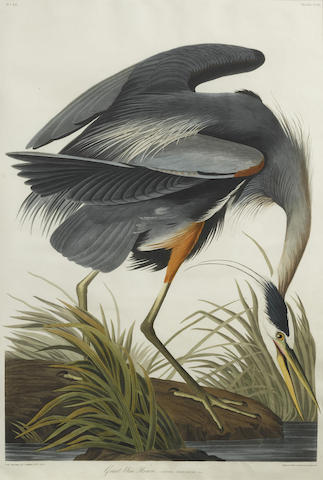 John James Audubon-After John James Audubon - Great Blue Heron (Pl. CCXI)-1834