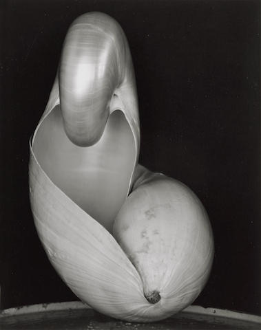 Edward Weston-Shell-1927