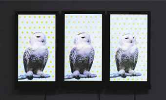 Robert Wilson-Snow Owls-2006