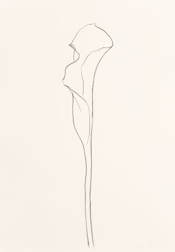 Ellsworth Kelly-Calla Lily 3-1984