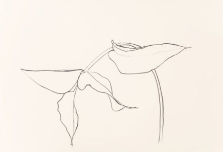 Ellsworth Kelly-Philodendron I-1984