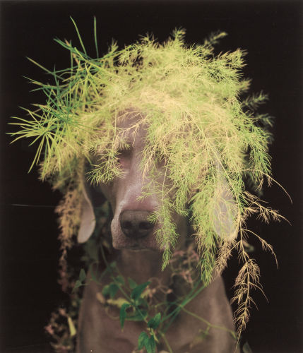 William Wegman-Rousseau-2003
