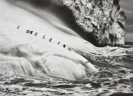 Sebastiao Salgado-Chinstrap Penguins (Pygoscelis Antartica) On An Iceberg Located Between Zavodovski And Visokoi Islands, South Sandwich Islands-2009