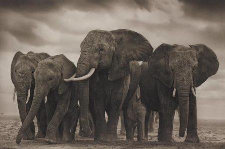 Nick Brandt-Elephant Five, Amboseli-2008