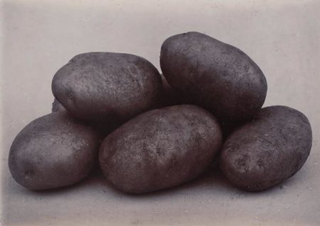 Charles Jones-Up-To-Date Potatoes-1900